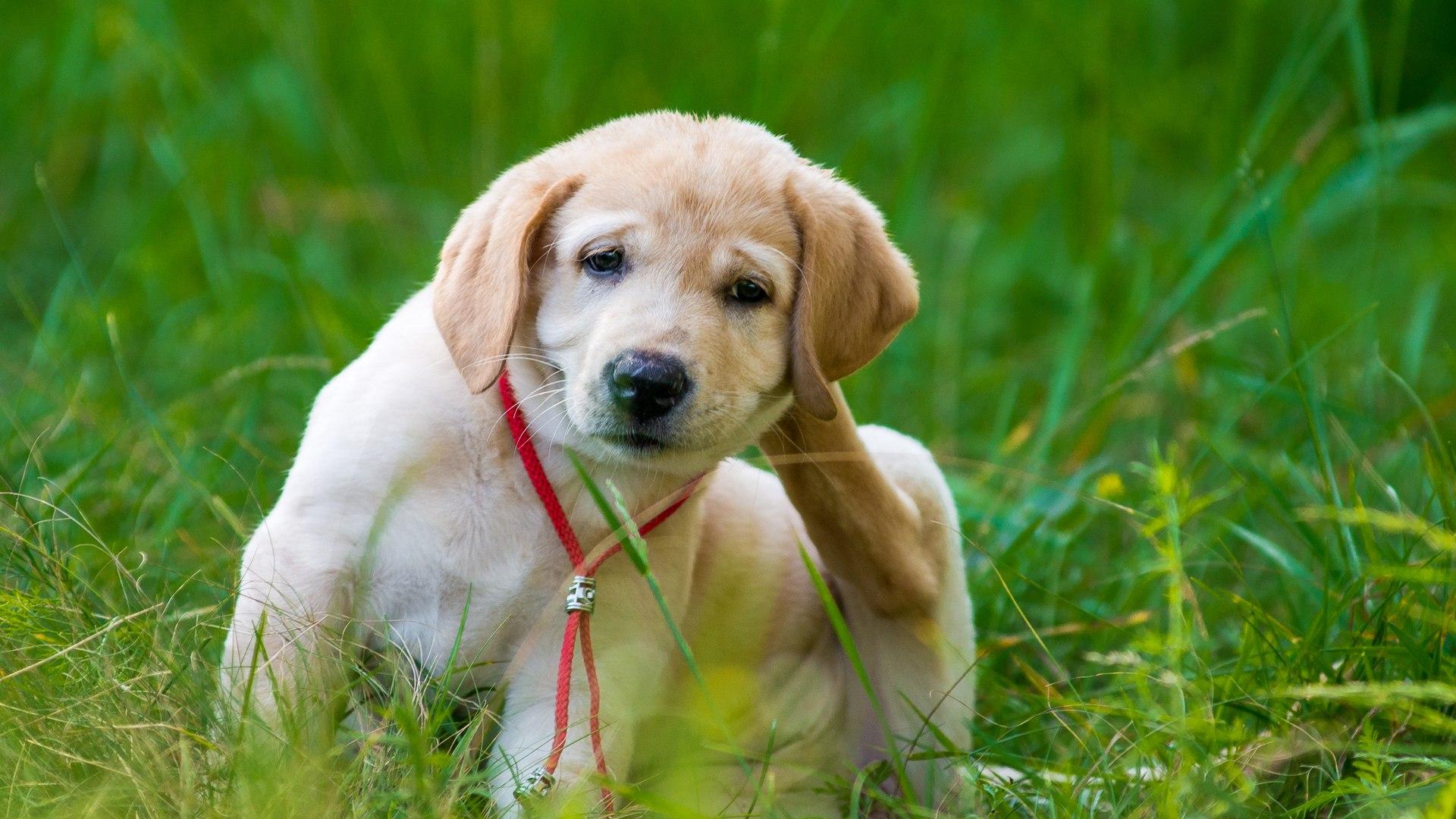 Previna seu cachorro de pulgas e carrapatos