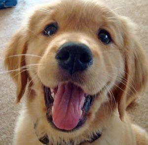 [Você precisa ler] 10 formas de retribuir o amor recebido por seus pets!