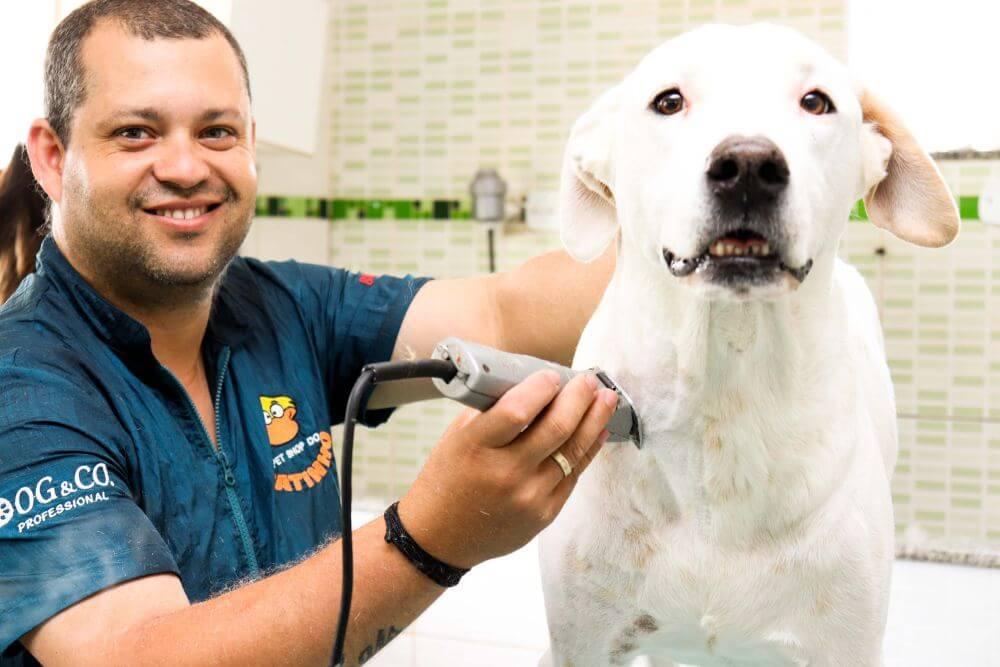 cachorro banho pet shop do patinho