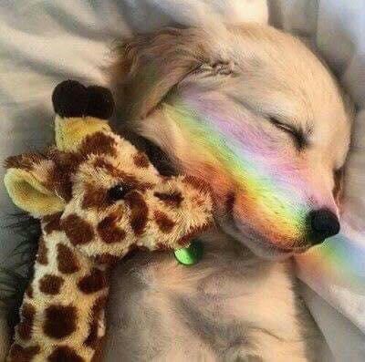 cachorro com girafa de pelúcia