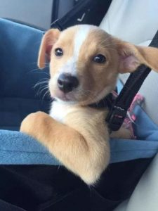 Atendimento Convencional x Atendimento Humanizado em Pet Shop
