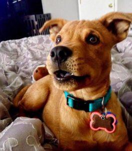 Escolher o melhor pet shop: Descubra como