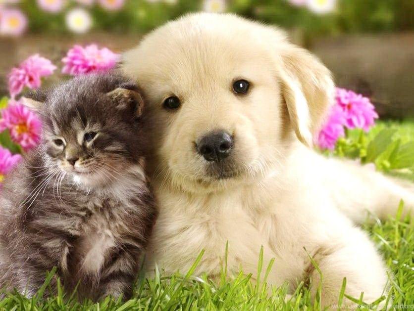 Cuidar de cachorros e gatos da forma correta: Descubra tudo nesse post