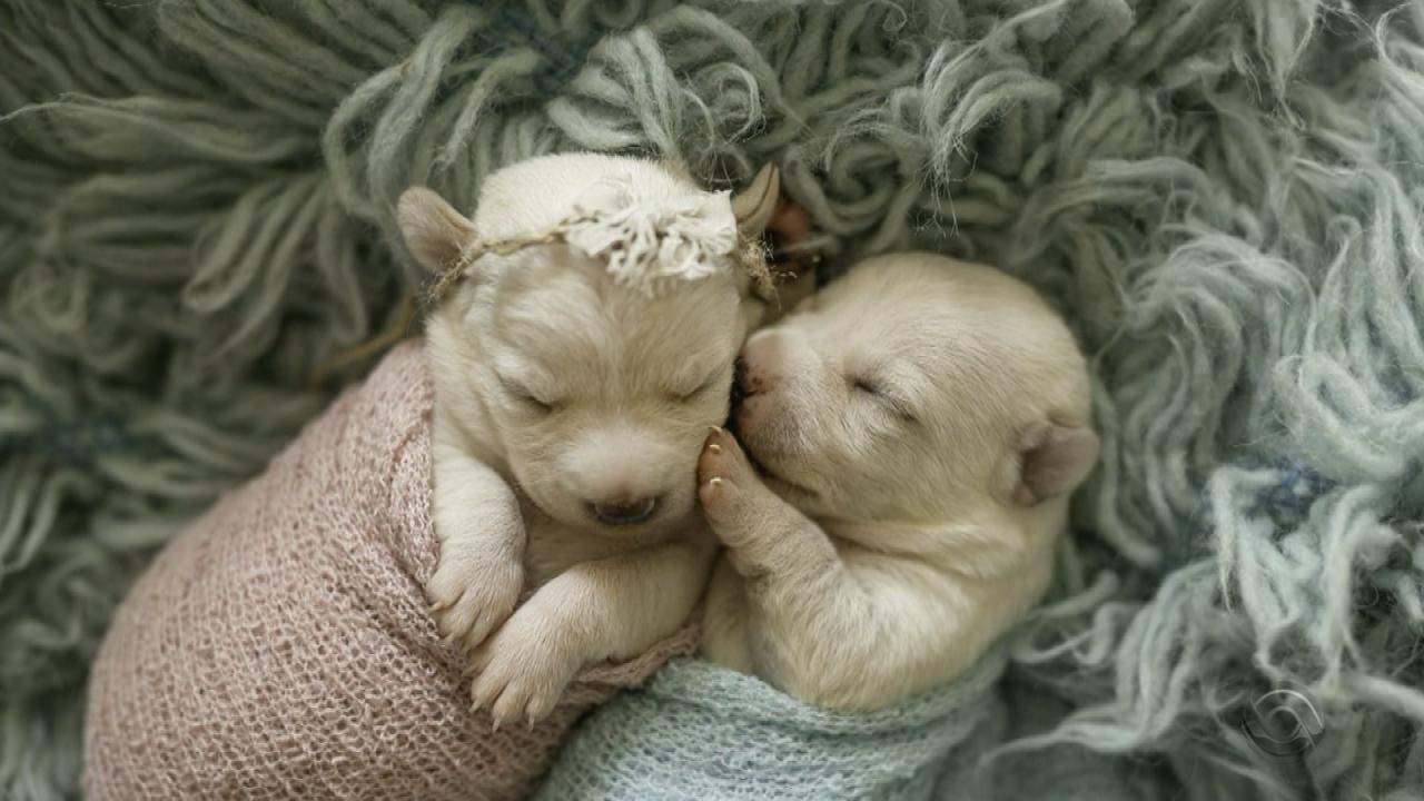 Fases da vida de um cachorro - Fase neonatal