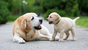 Fases da vida de um cachorro