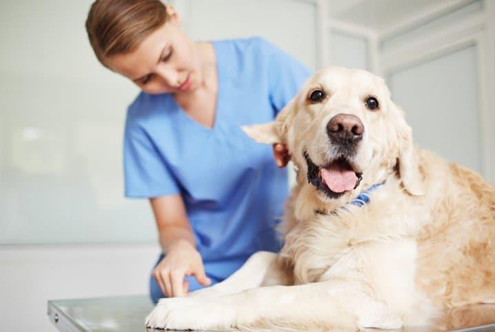 Consultas com Médicos Veterinários