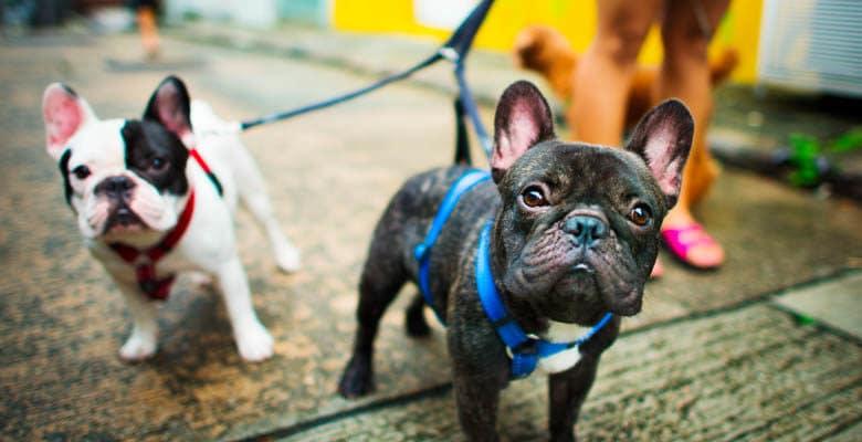 Traga seu amigão para o Pet Shop do Patinho: Confira 7 razões para isso