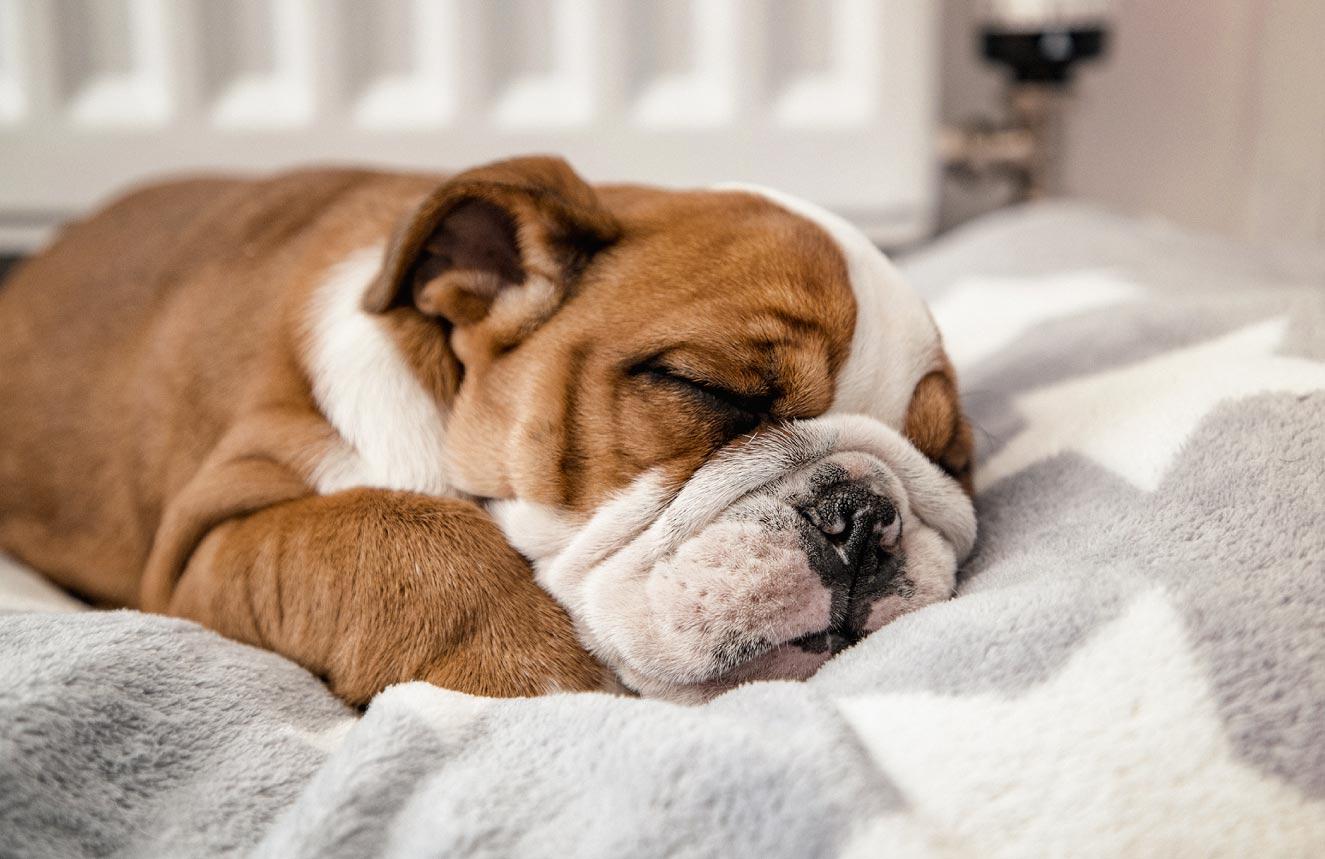 Cachorros também sonham? Saiba tudo nesse post